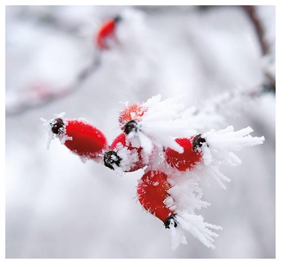 Unsere Weihnachtskarte 2019 stammt vom Fotografen Wolfgang Hemmer.